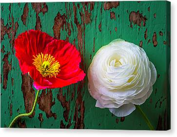 Red Poppy And White Ranunculus Canvas Print by Garry Gay
