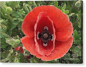 Canvas Print featuring the photograph Red Poppy Flower 2 by Jean Bernard Roussilhe