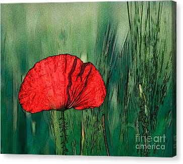 Canvas Print featuring the photograph Red Poppy Flower by Jean Bernard Roussilhe