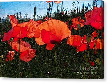 Canvas Print featuring the photograph Red Poppy Flowers In Grassland by Jean Bernard Roussilhe