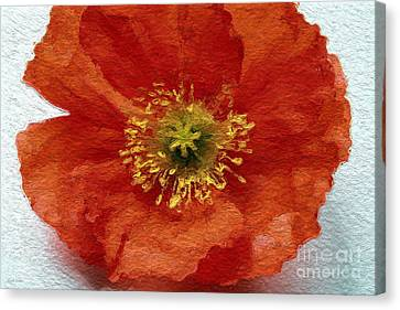Red Poppy Canvas Print by Linda Woods