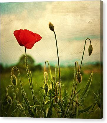 Red Poppy Canvas Print by Violet Gray