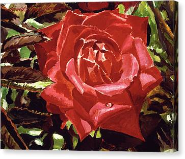 Canvas Print - Red Raindrop by David Lloyd Glover
