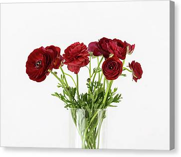 Canvas Print featuring the photograph Red Ranunculus by Kim Hojnacki