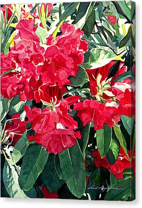 Red Rhododendrons Of Dundarave Canvas Print by David Lloyd Glover