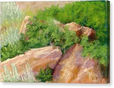 Salt Air Canvas Print - Red Rock And Scrub Oak by David King