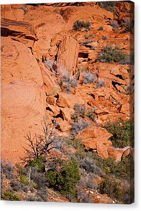 Red Rocks Canvas Print by Rae Tucker