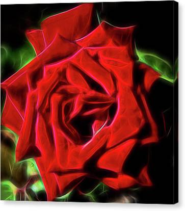 Red Rose 1a Canvas Print