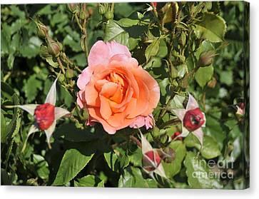 Red Rose 5 Canvas Print by Rudolf Strutz