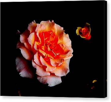 Red Rose And Bud Canvas Print by Gaynor Perkins