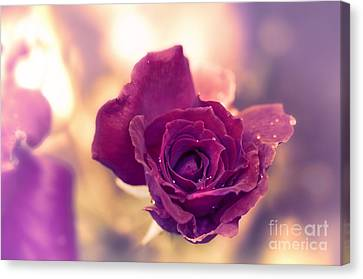 Red Rose Canvas Print by Charuhas Images