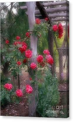 Red Rose Dream Canvas Print by Elaine Teague