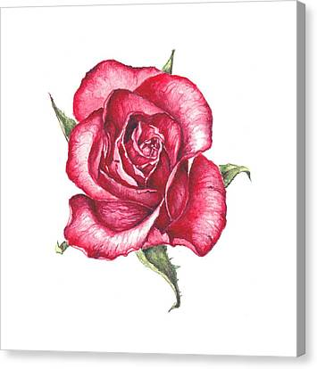 Canvas Print featuring the painting Red Rose by Heidi Kriel
