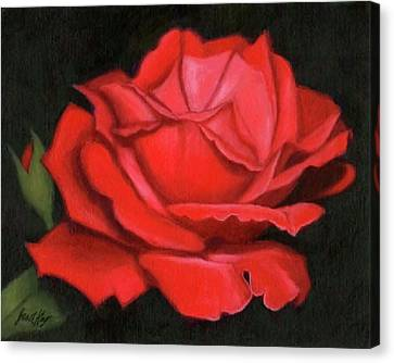 Red Rose Canvas Print by Janet King