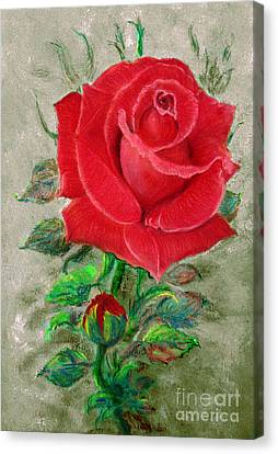 Red Rose Canvas Print by Jasna Dragun