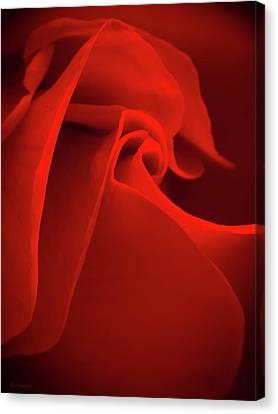 Red Rose Macro Canvas Print
