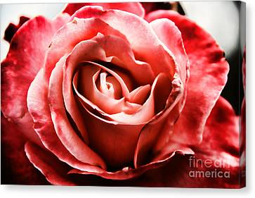 Canvas Print featuring the photograph Red Rose  by Mariola Bitner