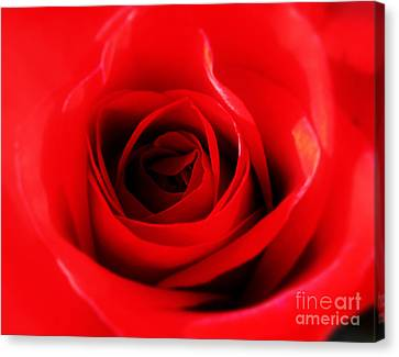 Red Rose Canvas Print by Nina Ficur Feenan