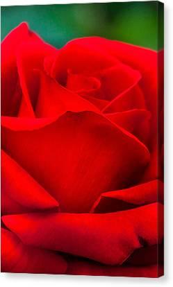 Centre Canvas Print - Red Rose Petals 2 by Az Jackson