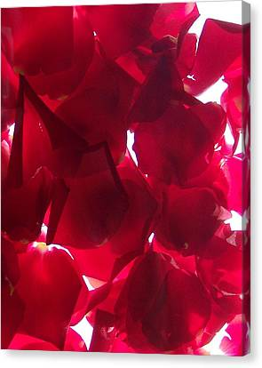 Red Rose Petals Canvas Print