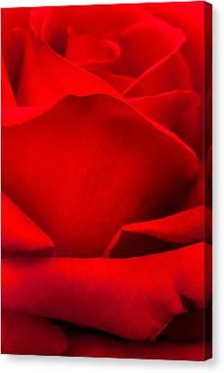 Centre Canvas Print - Red Rose Petals by Az Jackson