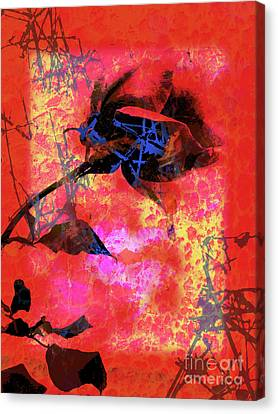 Red Rose Canvas Print by Robert Ball