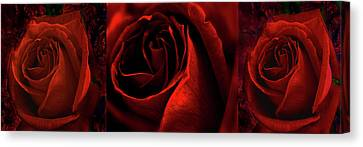 Red Rose Tryptych Canvas Print by Nareeta Martin
