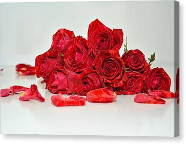 Red Roses And Rose Petals Canvas Print