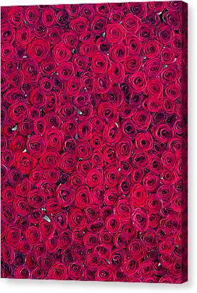 Red Roses Canvas Print by Vitor Costa