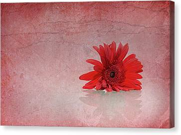 Red Scent Canvas Print