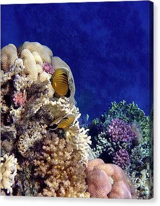 Red Sea Exotic World Canvas Print by Johanna Hurmerinta