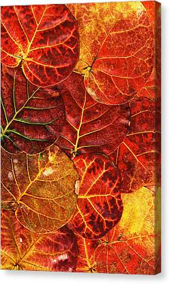 Red Sea Grapes By Sharon Cummings Canvas Print by Sharon Cummings