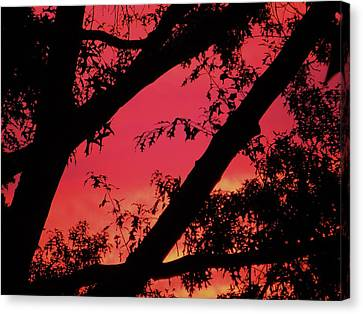 Canvas Print featuring the photograph Red Sky by Susan Carella
