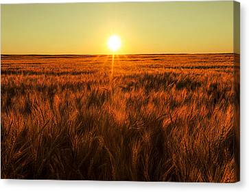 Field Of Crops Canvas Print - Red Sky Wheat by Todd Klassy