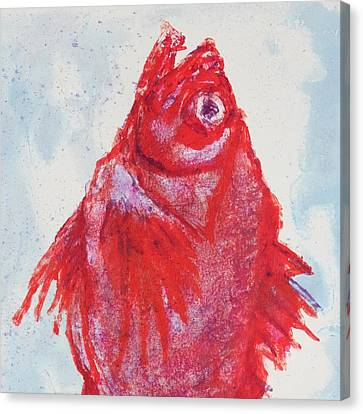 Red Snapper,head  Canvas Print
