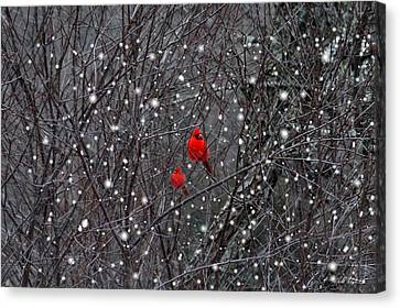 Red Snow Canvas Print by Bill Stephens