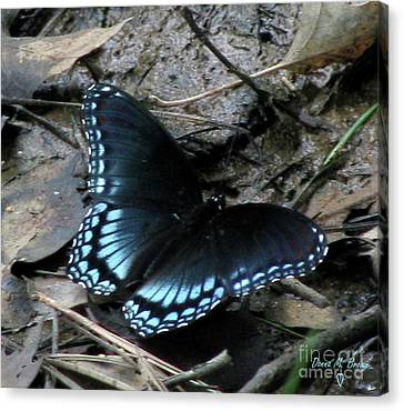 Canvas Print featuring the photograph Red Spotted Purple Swallowtail Butterfly by Donna Brown