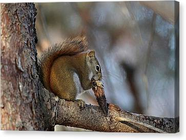 Red Squirrel With Pine Cone Canvas Print by Linda Crockett