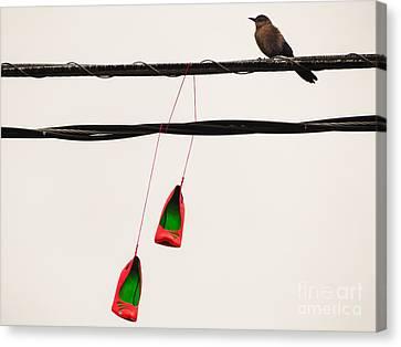 Red Stilettos With Bird Canvas Print