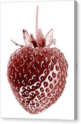Red Strawberry Botanical Illustration Canvas Print by Frank Tschakert