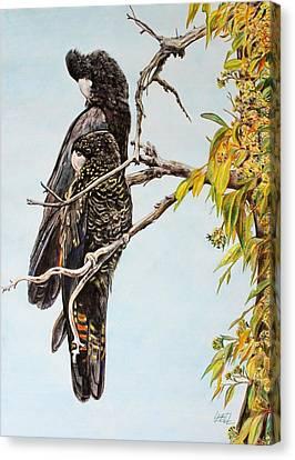 Red Tail Black Cockatoos Canvas Print