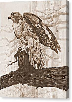 Red Tail Hawk Canvas Print by William Michel