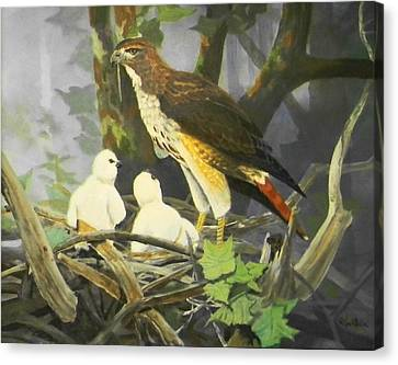 Red-tailed Hawk And Chicks Available Canvas Print