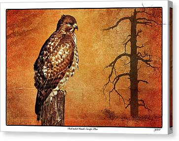 Red-tailed Hawk Escape Plan Canvas Print