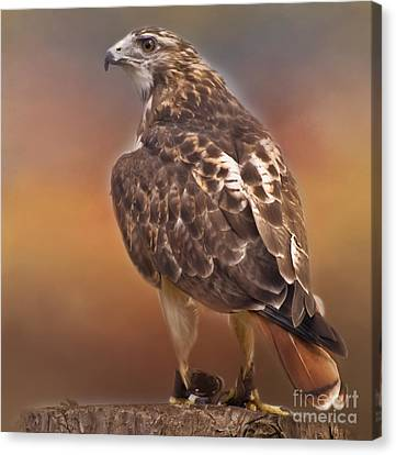 Kathy Rinker Canvas Print - Red Tailed Hawk by Kathleen Rinker