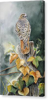 Red-tailed Hawk Lookout Canvas Print by Patricia Pushaw