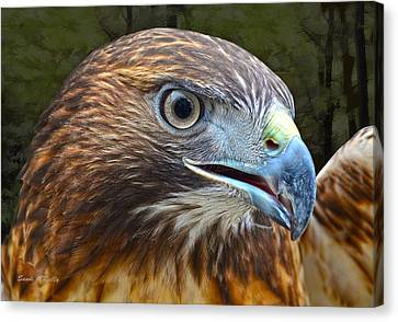 Red-tailed Hawk Portrait Canvas Print by Sandi OReilly