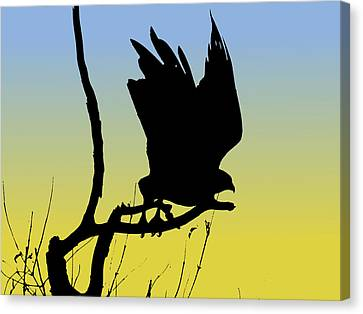 Red-tailed Hawk Taking Flight Silhouette At Sunrise Canvas Print by Marcus England