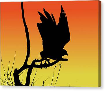 Red-tailed Hawk Taking Flight Silhouette At Sunset Canvas Print by Marcus England
