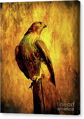 Red Tailed Hawk . Texture . 40d10167 Canvas Print by Wingsdomain Art and Photography